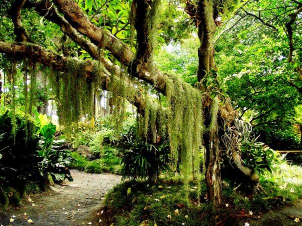 Лес природа зелень 35 шт часть 3