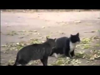Кошки оштрафованы псом, Новые Приколы, Шутки, Смешные ролики Юмор! Прикол! Смех