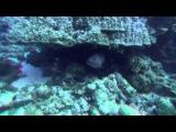 Большое путешествие вглубь океанов 3D часть1 6 OceanWorld 3D