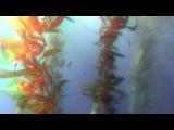 Большое путешествие вглубь океанов 3D часть2 6 OceanWorld 3D