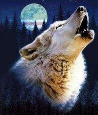 Lonely Wolf, 17 ноября 1961, Сыктывкар, id70855576