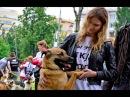 """""""Май Догс"""",  выставка собак из приюта """"Эко-Бирюлёво"""" в Таганском парке."""