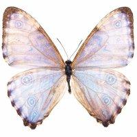 Бабочки Обои рабочий стол.