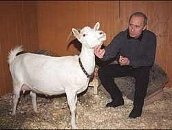 сексуальная коза фото