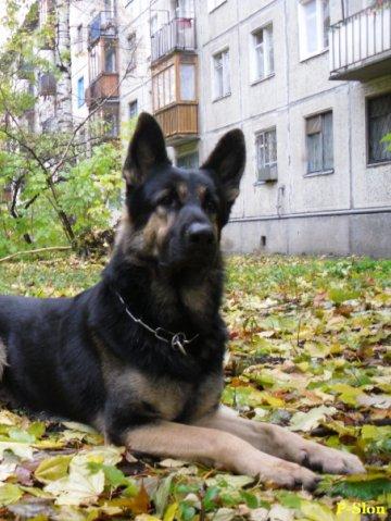 http://cs9243.vkontakte.ru/u1408937/53156805/x_4b22604c.jpg
