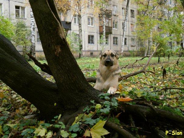 http://cs9243.vkontakte.ru/u1408937/53156805/x_e7cf44c3.jpg
