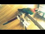 Большие попугаи: ара макао, зеленокрылый ара, сине-желтый ара, желтохохлый  какаду.