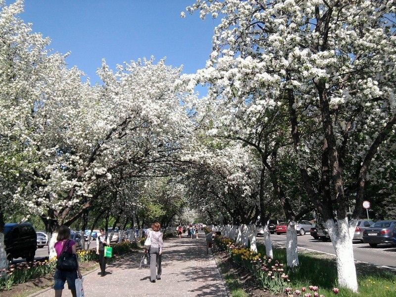 Spring time ... - Pagina 2 S9w_DXJId0k