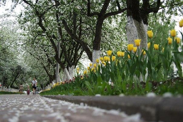 Spring time ... - Pagina 2 MiXWKz_amWc