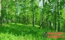 В результате падения астероида на Земле стали доминировать лиственные деревья.