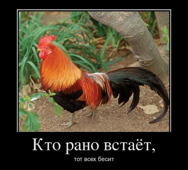 юмор картинки приколы: