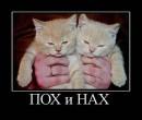 Maxim Kuznetsov фото #4