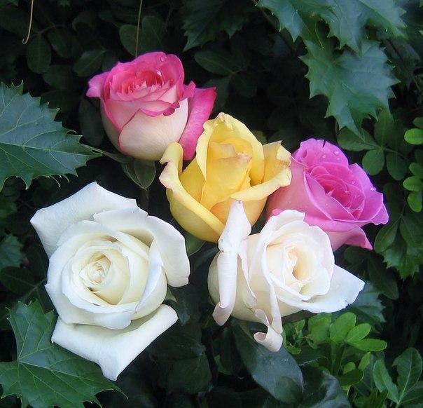 картинки сказочных цветов: