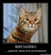 Елена Мошкина, 24 ноября , Мурманск, id77966099
