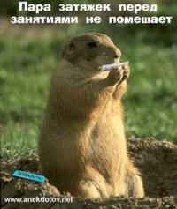 Степан Курочкин, 1 июня 1981, Смоленск, id127547284