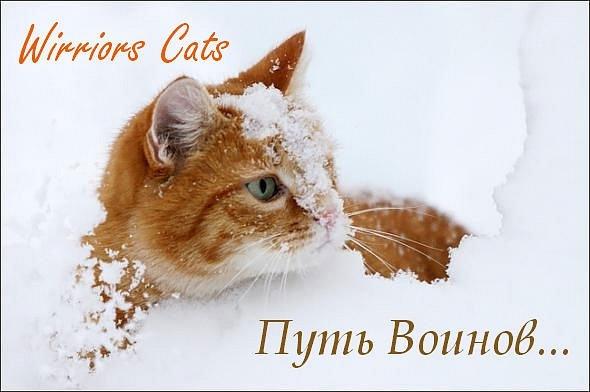http://cs9287.vkontakte.ru/u75449296/123361172/x_07863281.jpg