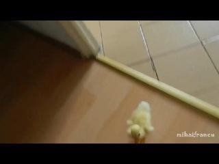 Crazy duck (COUB)