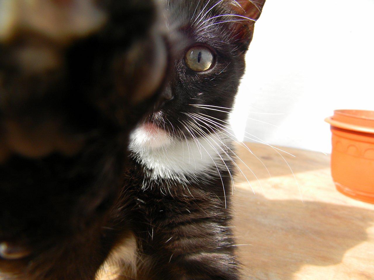 Про кошек - Страница 3 Z_e03fa593