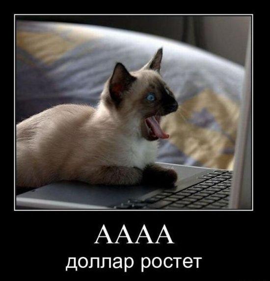 Котоматриця!)))) X_f4dfc40f