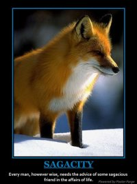 Fox Red, 21 февраля 1990, Геленджик, id58102674
