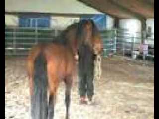 Hempfling - Aggressive Stallion Tamed - Borderline March 2008