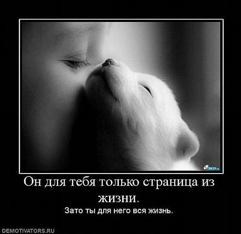 http://cs9302.vkontakte.ru/u56810494/103728084/x_f7b9a9fe.jpg