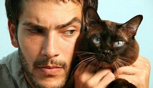 Почему кот лучше чем мужчина