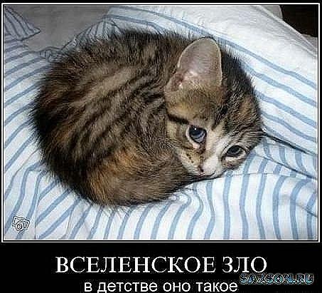 http://cs9303.vkontakte.ru/u68348819/112150390/x_116c674d.jpg