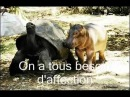 ♥Animals Wizdom Empathy Love Compassion♥ Most Humans Are Less Evolved