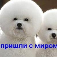 Демонический Пёс, 15 января 1989, Санкт-Петербург, id5741214