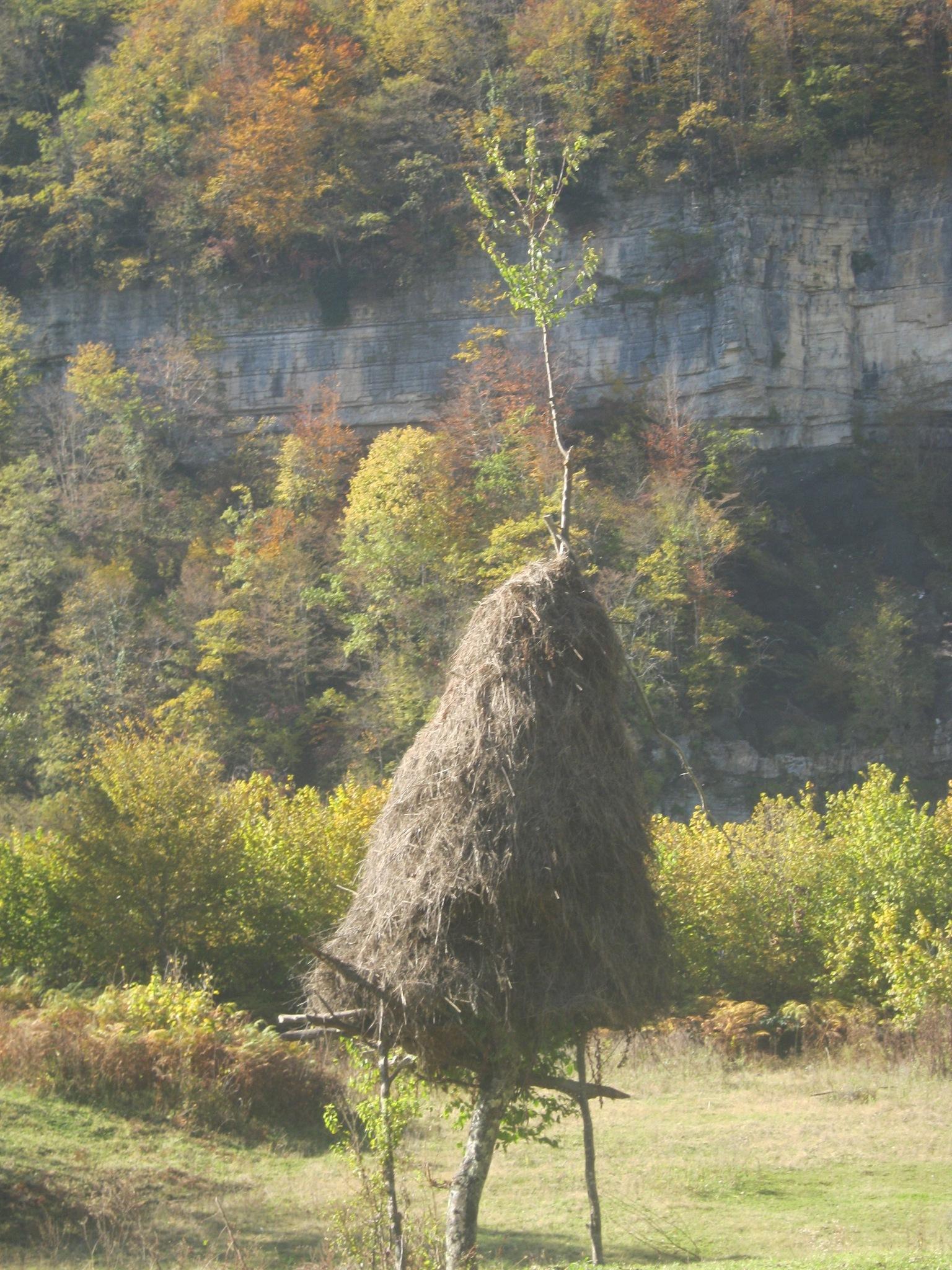 Стога сена часто подвешены на деревьях в западной Грузии