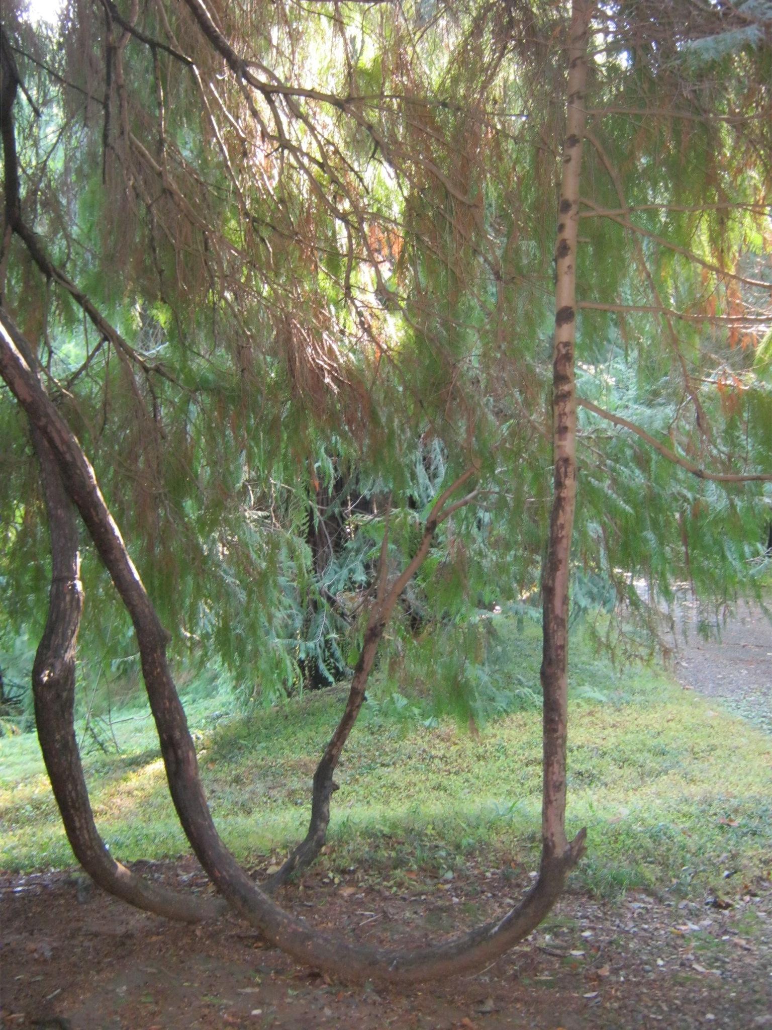 В ботаническом саду Батуми.