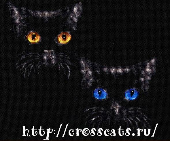 Две черные кошки с сияющими