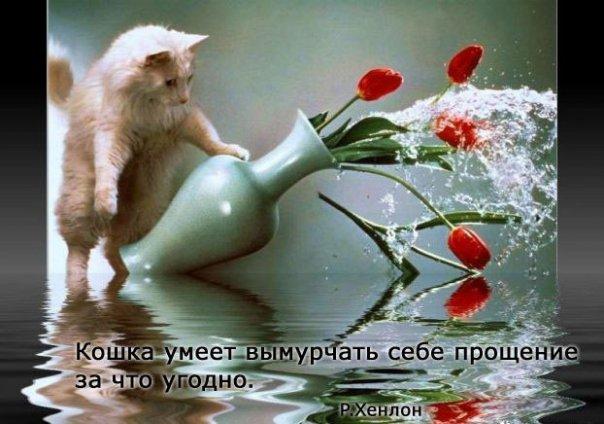 http://cs9320.vkontakte.ru/u28094468/93327573/x_01b6ba94.jpg