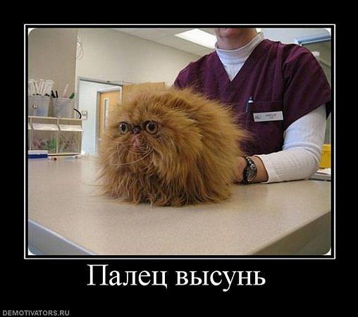 http://cs9324.vkontakte.ru/u43692401/101261245/x_4316e6d4.jpg