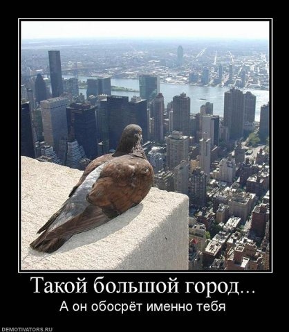 http://cs9324.vkontakte.ru/u4514870/100806074/x_056d97ac.jpg