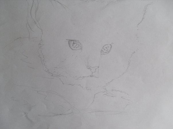 http://cs933.vkontakte.ru/u57819691/113999116/x_e8647c5e.jpg