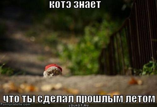 котЭ)