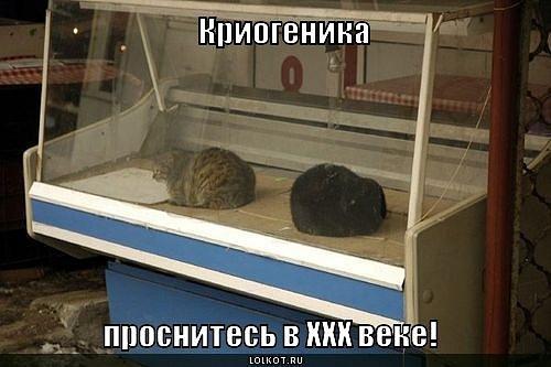 смешные коты картинки с надписями.