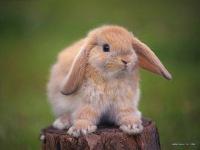 Волшебный Кролик, id107392312