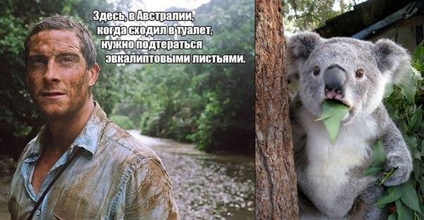 http://cs9340.vk.me/v9340603/16a/JvUY5XTQJcY.jpg