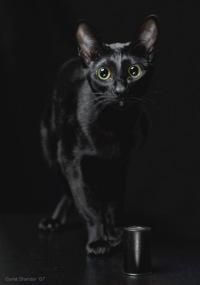 Чёрная Кошечка, 1 июля 1995, Ярославль, id104113267