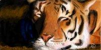 "Схема вышивки  ""Тигр "": таблица цветов."