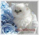 Марина Ефремова, 24 января , Нижний Новгород, id95906485
