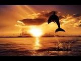 Территория заблуждений  31. Природные катаклизмы; тайны планет; странные существа...  / 11.06.2013
