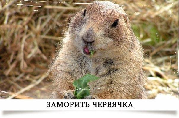 http://cs9345.vk.me/v9345512/25b/5xvUQmZGYCc.jpg
