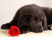 Doggy Dog, 29 января 1996, Москва, id82769672