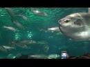 Океанариум в Барселоне (Aquarium Barcelona)