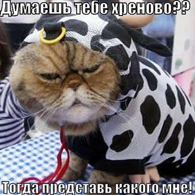 Марат Алиев, 5 марта , Южно-Сахалинск, id8023248