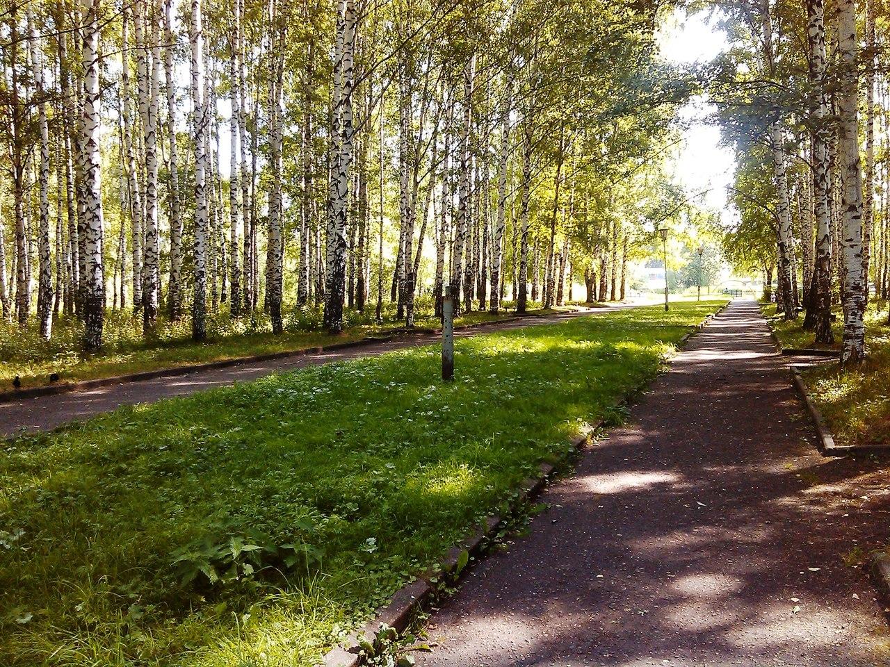 Во всех парках Ярославля запретили разводить костры и жарить шашлыки.